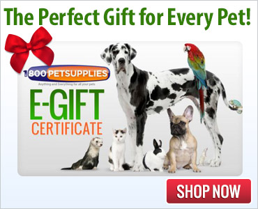 The Perfect Gift For Every Pet