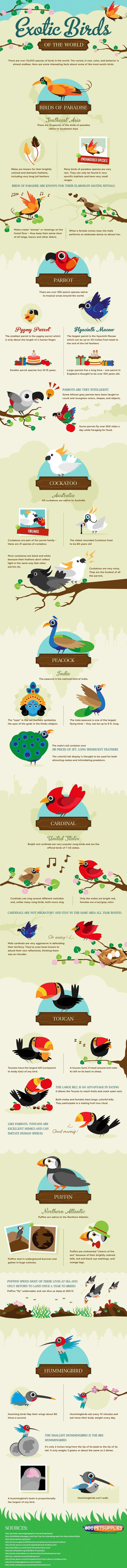 The Most Exotic Birds Infographic