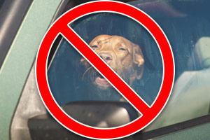 do not leave dogs in a hot car