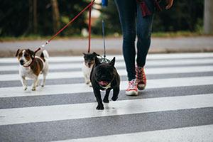 dogs on city street