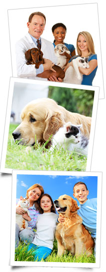 petsupplies.com Pet Insurance
